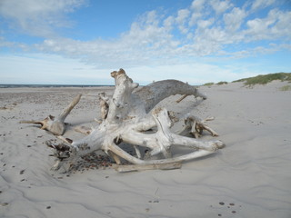 Fototapeta korzeń na plaży obraz