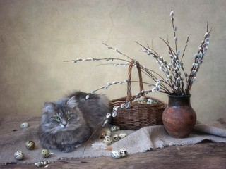 Spring still life with willow branches and gray kitty