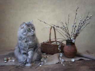 Pretty gray kitty and willow branches