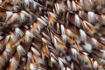 Abstract of Feather Duster Worm Tentacles on Reef in Raja Ampat