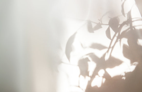 Abstract shadow of the leaves on a white wall background.