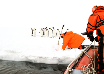Scientists approaching to a group of emperor penguins