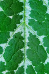 Background and pattern of green leaves