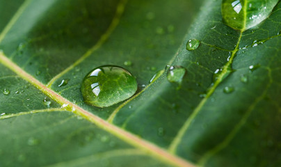 Colorful nature macro photography of water drops on a green leaf. Ecology, nature, environment, and photography concept