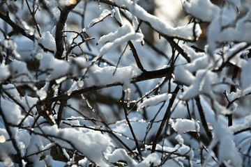 Snow on the branches of trees. Abstract texture. Blue sky. Winter.