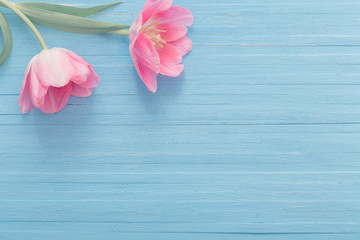 two pink tulips on blue wooden background