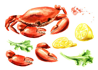 Red cooked crab with lemon and lettuce set, seafood, Watercolor hand drawn illustration isolated on white background