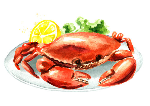 Red cooked crab with lemon on the plate, seafood, Watercolor hand drawn illustration isolated on white background