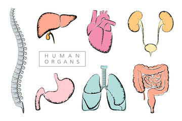 Human organs collection. Vector illustration in retro style