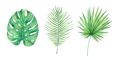 Tropical leaves set, jungle leafs isolated elements on the white background.