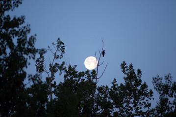 moon and bird