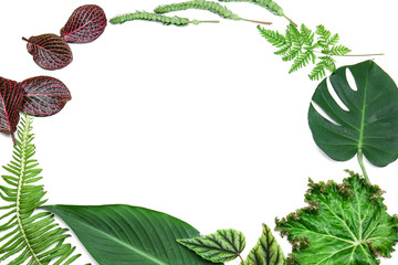 Wall Mural - Frame made of tropical leaves on white background