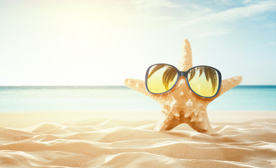 Happy starfish enjoy the sun at the empty tropical beach with copy space, Summer background