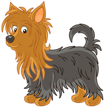 Little funny Australian silky terrier with long black and brown hair, vector illustrations in a cartoon style