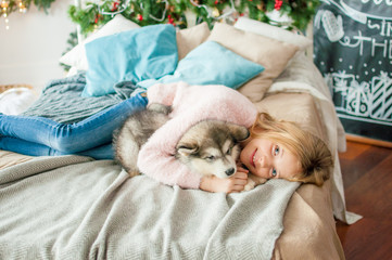 Cute girl with blond long hair plays with small Malamute puppy at home in a room decorated for Christmas