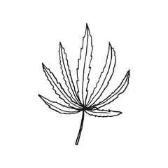 cannabis leaf vector doodle sketch isolated on white background