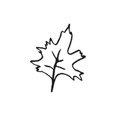 maple leaf vector doodle sketch isolated on white background