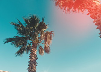 Palms in the sunlight.Batumi.Georgia