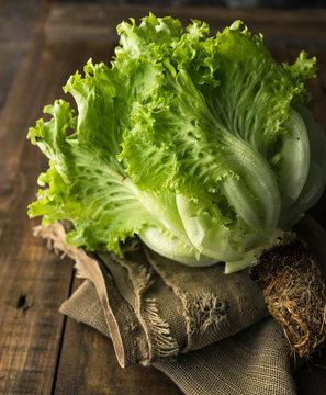 Loose-leaf Lettuce on rustic background
