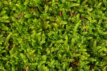 moss texture in the detail close up