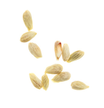 Seeds in tangerines on a white background