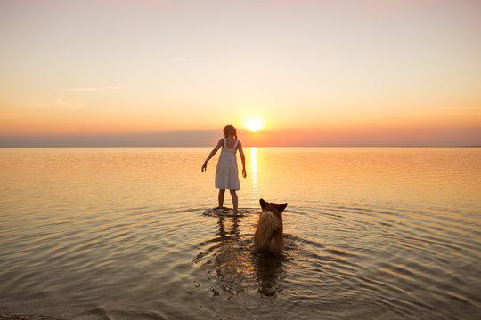 little girl is walking with a dog corgi