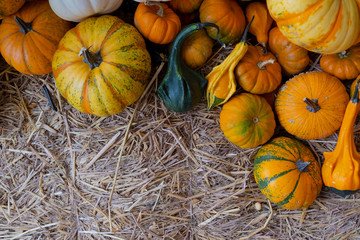 Many type of ripe orange pumpkin on hay.Copy space and Image.
