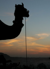 Camel herders assemble on first day of annual camel fair in Pushkar.