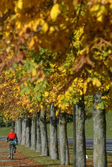 A woman rides on her bicycle through an autumnally coloured park in Munich.