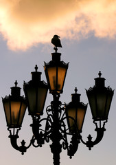 A crow rests on a street lamp at sunset in Moscow's centre.