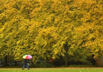 A man walks through an autumnally park in Osnabrueck.