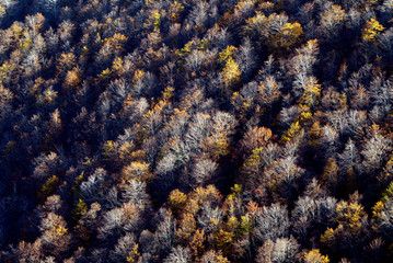 Mountain forest with autumn colours at Mt Biokovo, overlooking Croatian Adriatic coast.