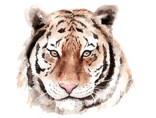 watercolor drawing tiger, head, brown eyes, sketch