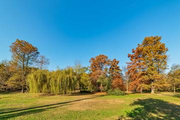 A beautiful park in Novi Sad, Serbia in autumn