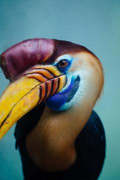 Close up of colorful bird