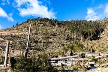 Trentino Alto Adige, Lavazè, foresta verticale dopo il passaggio del ciclone Vaia il 29 ottobre 2018