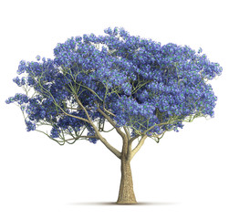 a spring violet bloom tree isolated 3D illustration