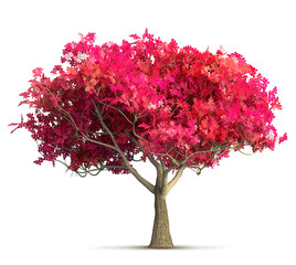 cherry blossom tree isolated 3D illustration