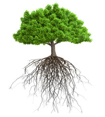 a tree with roots isolated 3D illustration