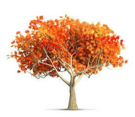 an orange autumn maple tree isolated 3D illustration