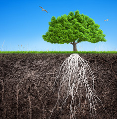 ф tree and soil with roots and grass 3D illustration