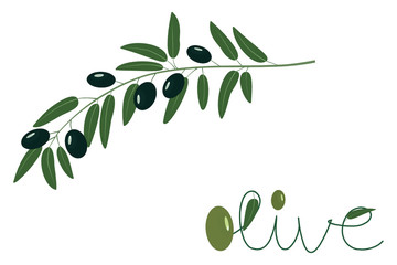 Vector illustration of olive tree (Olea europaea) branch with black ripe olives and stylized lettering.