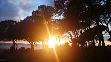 coucher de soleil à travers les pins - fond de mer avec photographe- Punta Trettu - Sardaigne