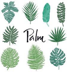 Set of Green Palm leaves Hand drawing Isolated object Sketch style