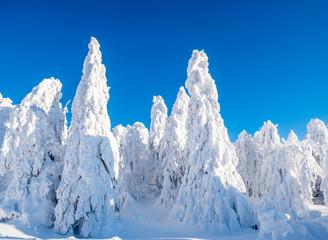 winterlicher Wald im Erzgebirge