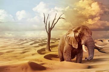 elephant on surreal desert