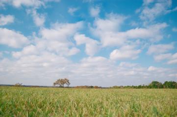 Aluminium Prints Blue Texas Fall landscape with Tree