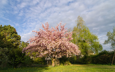 Frühling wird kommen