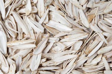husk of white roasted sunflower seeds with spices and salt closeup