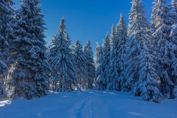 Winterzauber im Thüringer Wald